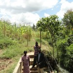 The Water Project: Makhele Spring Catchment Project -