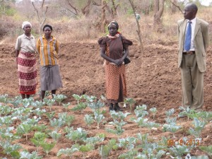 The Water Project : kenya4032_crops-growing