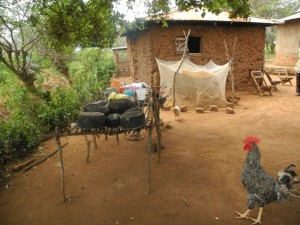 The Water Project : kenya4299-03-first-members-chicken-day-shelter-and-the-chickens