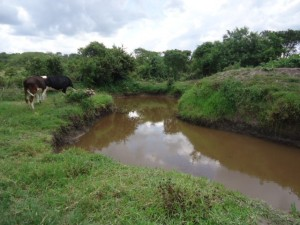 The Water Project : uganda6056-02-previous-water-source