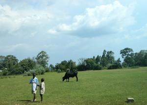 The Water Project : kenya4317-03-navakholo-field