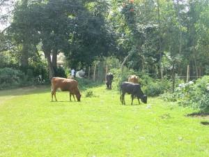 The Water Project : kenya4317-04-navakholo-field