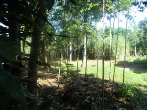 The Water Project : kenya4319-02-clothline