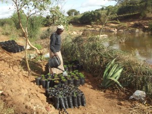 The Water Project : kenya4308-51-tree-seedlings