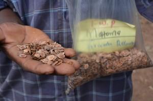 The Water Project : shg-matoma-nyumba-kumi_seedlings-distribution_grivelia-tree-june-2015-17