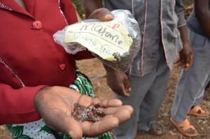 The Water Project : shg-matoma-nyumba-kumi_seedlings-distribution_june-2015-27