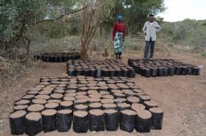 The Water Project : shg-matoma-nyumba-kumi_tree-nursery_june-2015-5