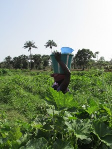 The Water Project : sierraleone5070-01-previous-water-source