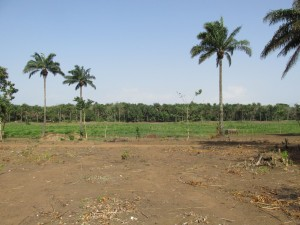 The Water Project : sierraleone5070-06-previous-water-source