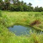 The Water Project: Moniya Village Well Rehabilitation -