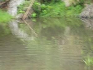 The Water Project : sierra-leone5074-01-alt-water-source