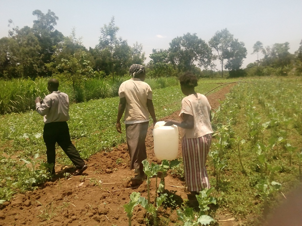 The Water Project : kenya4368-12-efwetero-group-farming-activities