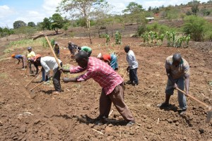 The Water Project : kenya4396-02-kee-drip-irrigation-farm-35