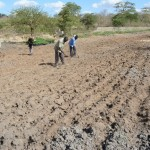 The Water Project: Vinya wa Mwau Drip Irrigation Project -