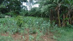 The Water Project : kenya4440-11-garden