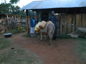 The Water Project : kenya4369-08-donkey-transport