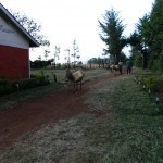 The Water Project : kenya4369-10-donkey-transport