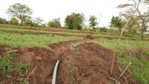 The Water Project:  Irrigation