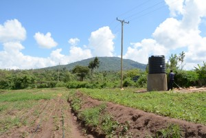 The Water Project : kenya4396-04-finished-irrigation