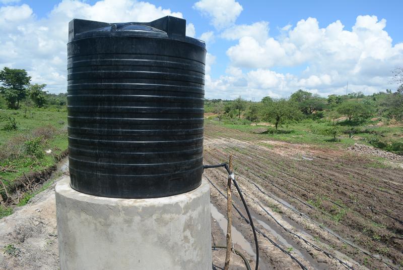 The Water Project Kenya Vinya Wa Mwau Drip Irrigation
