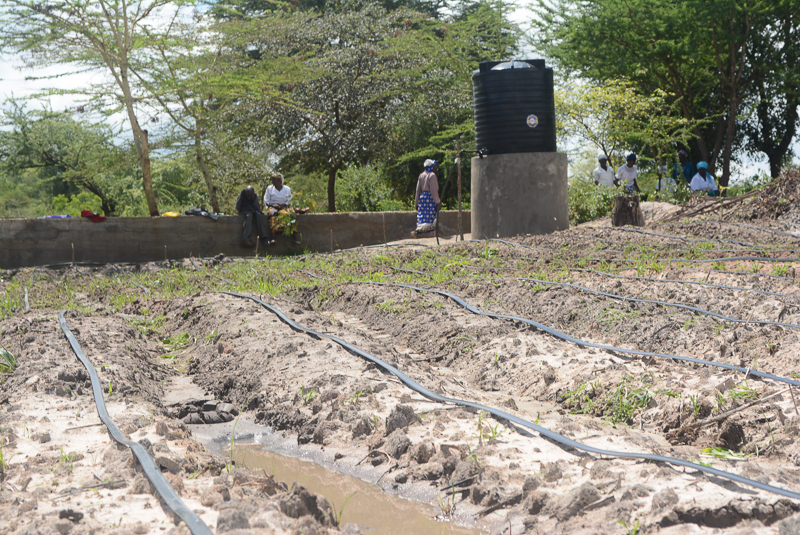 Photo of Vinya wa Mwau Drip Irrigation Project