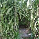 The Water Project : 11-kenya4511-bathing-room