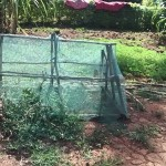 The Water Project: Kavehere Spring Protection Project -  Mosquito Net Fence