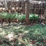 The Water Project: Kavehere Spring Protection Project -  Household Garden