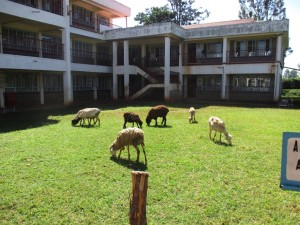 The Water Project : 3-kenya4616-school-livestock