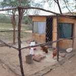 The Water Project: Ndwaani Primary School -  Chicken Coop