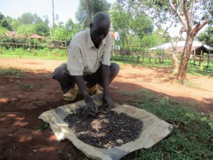 The Water Project : 11-kenya4591-coffee