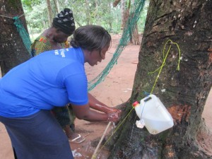The Water Project : 3-sierraleone5093-training