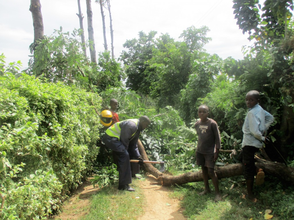 Staff heading for training had to cut this huge tree lto create a passway to the community