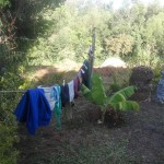 The Water Project: Shitungu Community A -  Clothesline