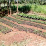 The Water Project : 15-kenya4644-tree-nursery