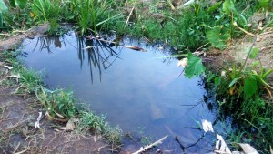 The Water Project:  Unprotected Source