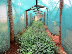 The Water Project : 7-kenya4666-greenhouse