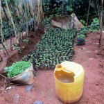 The Water Project: Emabungo Community -  Water For Small Farm