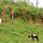 The Water Project: Shiamala Community -  Boy Herding Goats