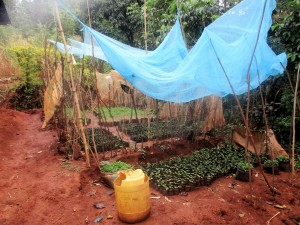 The Water Project:  Seedbed Farming