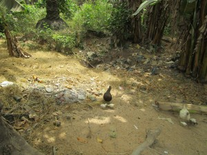The Water Project : 12-sierraleone5105-rubbish-pit