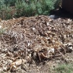 The Water Project: Eluhobe Community -  Compost Pile