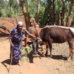 The Water Project: Wanzuma Community -  Grazing Her Cattle