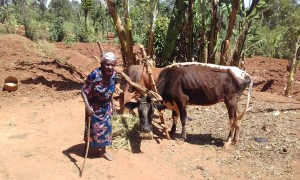 The Water Project:  Grazing Her Cattle
