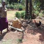 The Water Project: Wanzuma Community -  Feeding Chickens