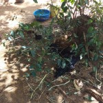 The Water Project: Murumba Community -  Chickens Rest In Shade