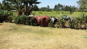 The Water Project : 15-kenya4708-drying-clothes