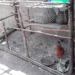 The Water Project: Lutari Community -  Chicken Coop