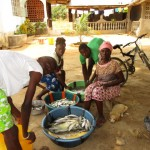 The Water Project : 15-sierraleone5110-fish