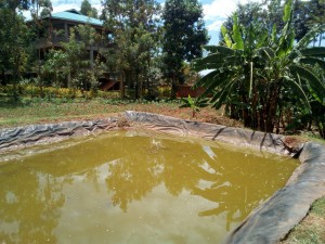 The Water Project : 18-kenya4660-fish-pond